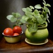 Stock Photo: Still Life with basil and tomatoes