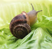 Close up to snail on green background — Stock Photo