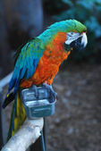Colorful parot closeup shot — Stock Photo