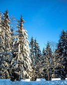 снежный зимний лес — Стоковое фото