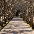 Tree Tunnel in The Park — Stock Photo