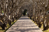 Tree Tunnel in The Park — Stockfoto