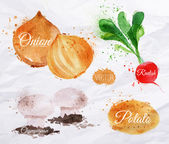 Vegetables watercolor radishes, onions, potatoes, champignons — Stock Vector