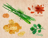 Spices herbs watercolor star anise, parsley, spring onion, ginger root kraft — Stock Vector