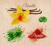 Spices herbs watercolor vanilla, rosemary, paprika kraft — Vector de stock