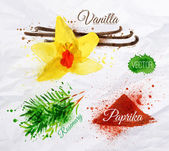 Spices herbs watercolor vanilla, rosemary, paprika — Vector de stock