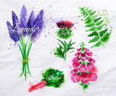 Flower grass lavender, thistle, foxgloves, fern, rhubarb — Vector de stock