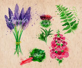Flower grass lavender, thistle, foxgloves, fern, rhubarb kraft — Stockvector
