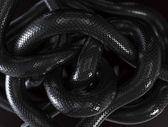 Snakes Background — Stock Photo