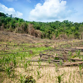 Deforestation in the Philippines — Stock Photo