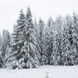 Snowy forest. Winter in northern Russia. — Stock Photo #19074245