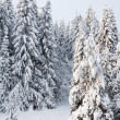 Snowy forest. Winter in northern Russia. — Stock Photo #19074343