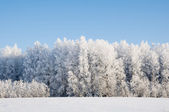 Snowy forest. Winter in northern Russia. — ストック写真