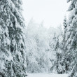 Trees in the snow. Snowy forest in northern Russia — Stock Photo #19203109