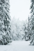 Trees in the snow. Snowy forest in northern Russia — Stock Photo