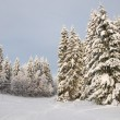 Stock Photo: Trees in the snow. Snowy forest in northern Russia