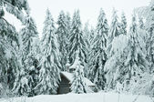 Wooden chapel in a snowy forest. Winter north — Stockfoto