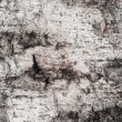 Royalty-Free Stock Photo: Background birch bark