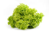Fresh lettuce salad isolated on a white background — Stockfoto