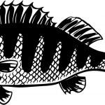 Big fish — Stock Vector #12402832