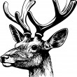 Red deer - Stock Vector