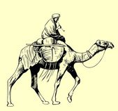 Bedouin on a camel — Stock Vector