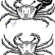 Two crabs — Stock Vector