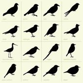 Birds(part1) — Stock Vector