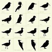 Birds (part 2) — Stock Vector