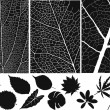 Set of leaf vector and texture — Stock Vector