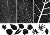 Set of leaf vector and texture — ストックベクタ