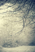 Forest branches — Stock Photo