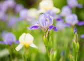 Frühling zeit blumen closeup — Stockfoto