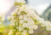 Буш цветы — Стоковое фото