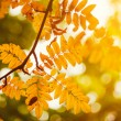 Fall background — Stockfoto