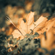 Fallen leaf at grass — Stock Photo