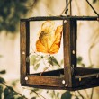 Leaf at feeder — Stock Photo