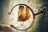 Leaf inside holder — Stock Photo