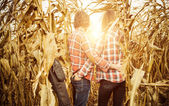 Young couple at dry corn — Stock Photo