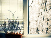 Onion at windowsill — Stock Photo