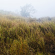 Grass in foggy mountain — Stock Photo