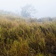 Stock Photo: Grass in foggy mountain