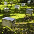 Stock Photo: Honey Bee Farm Boxes