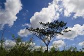 Einsamer baum, gras, wolken — Stockfoto