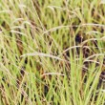 Fresh Green Grass — Stock Photo #27672357