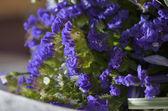 Purple Wedding Bouquet — Stock Photo