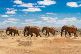 Elephants, Tsavo national park, kenya — Stock Photo