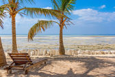 Chair and green trees on a white sand beach. Watamu, Kenya - Afr — Stock Photo