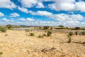 Savana landscape in Africa. Tsavo West, Kenya. — Stock Photo