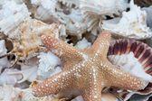 Closeup of braided straw basket full of starfish — Stock Photo